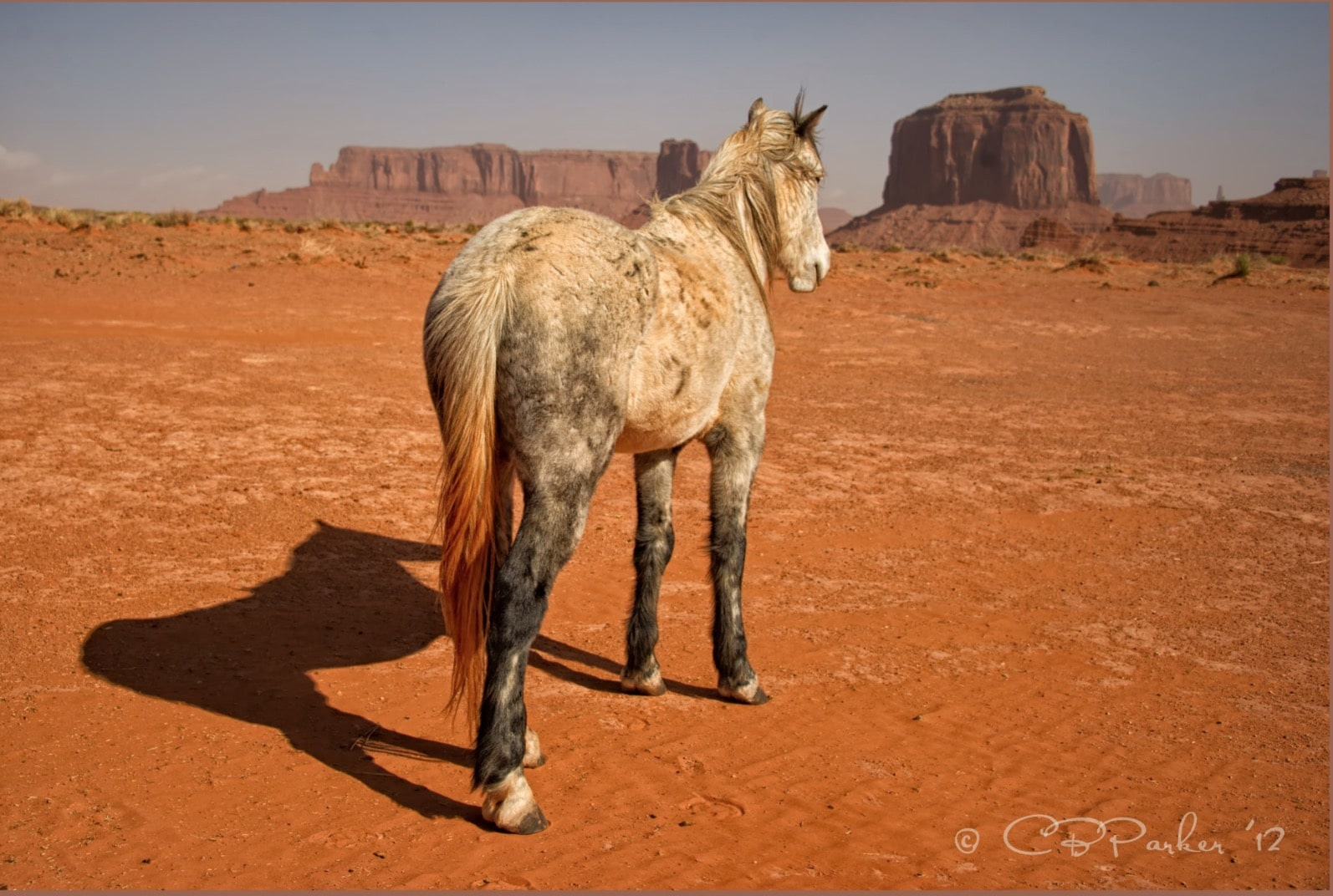 Navajo Pony After A Dust Storm
